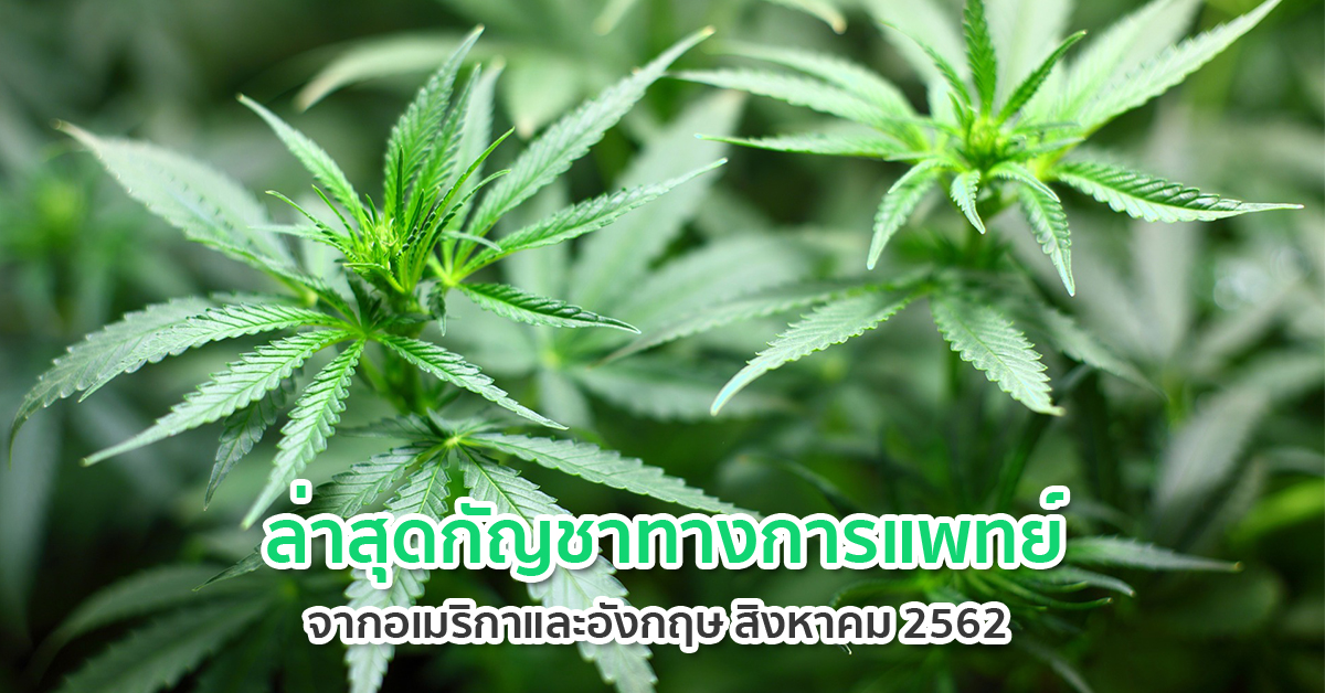 กัญชาไทย